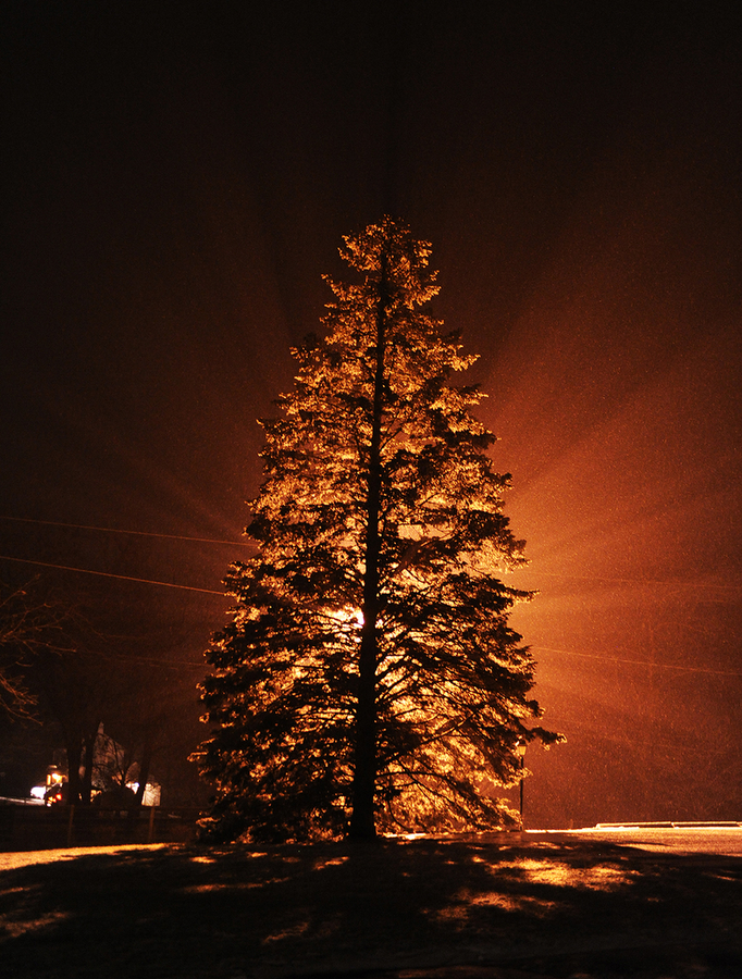 A tree is lit up by a sodium vapor light between Verona and Fort Defiance on Thursday, Jan. 2, 2014.