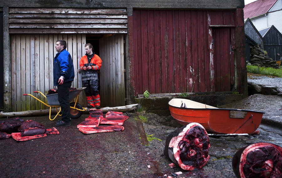 Two men stand near wheelbarrows to haul whale meat after a whale hunt in the Faroe Islands. Photo © Katie Currid