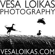 Vesa Loikas