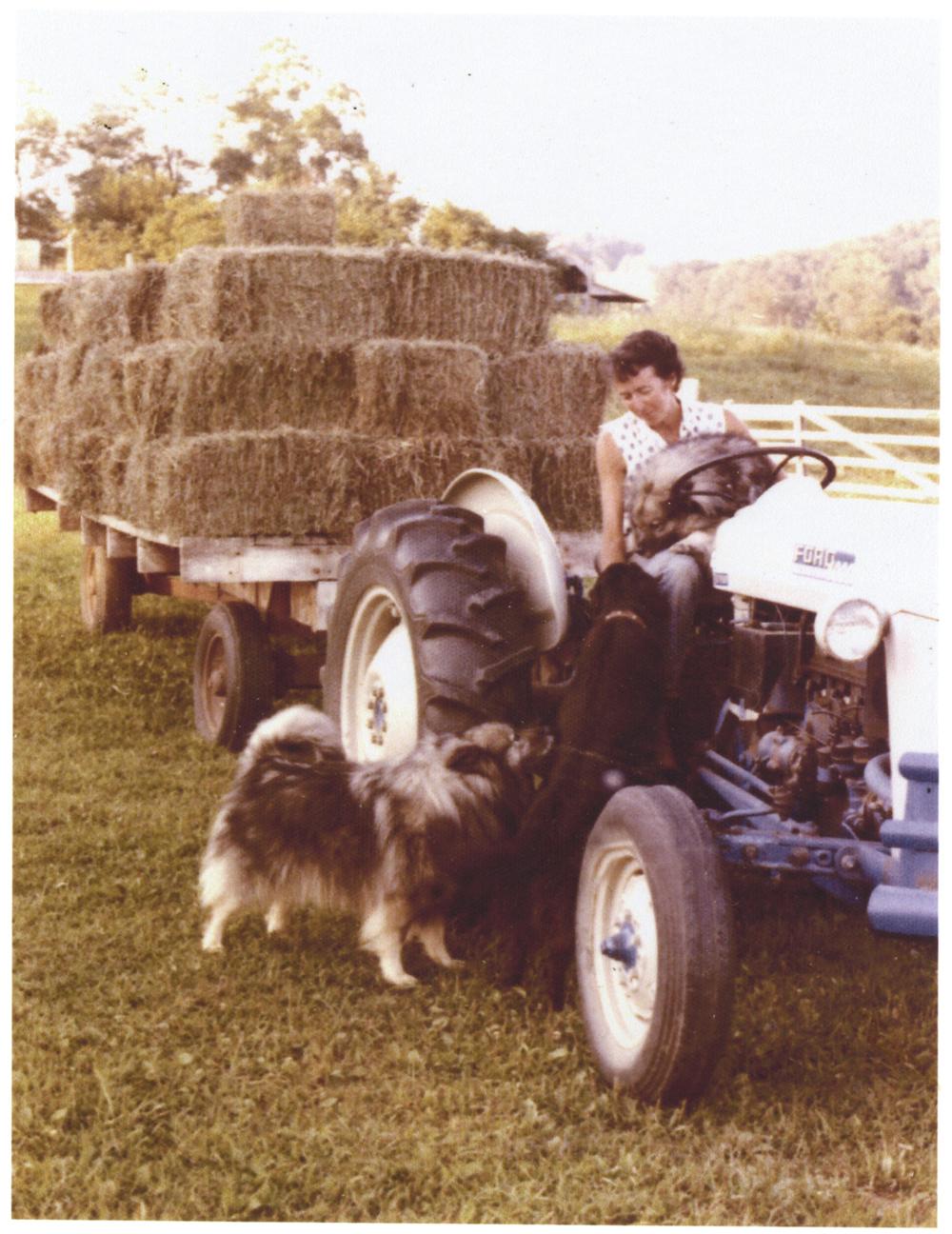 JLK1970s making hay.jpg