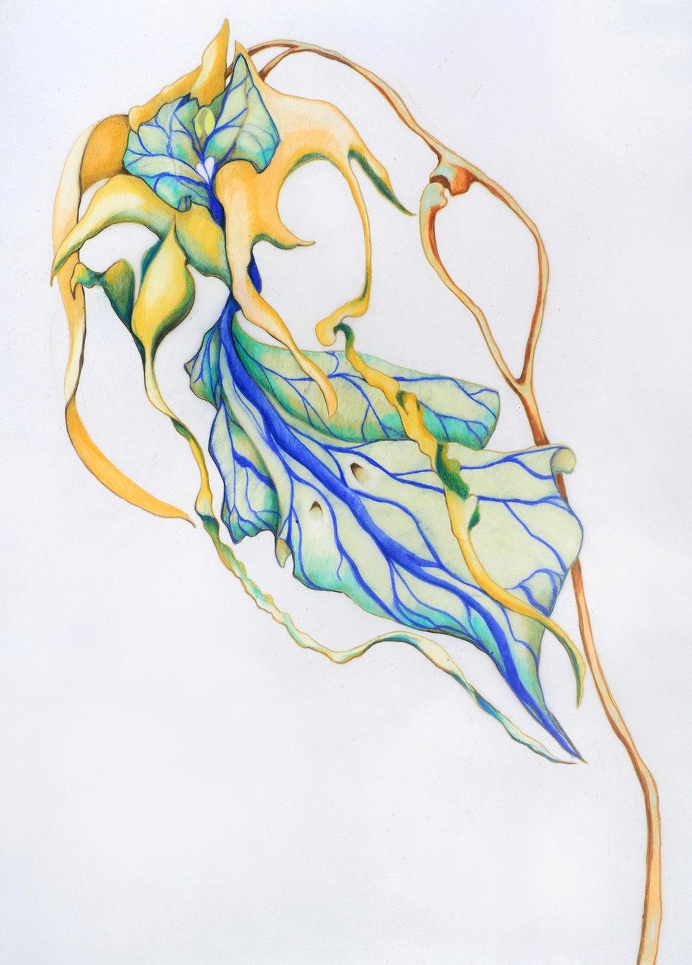 "Bird-Cowskull Orchid. Color pencil.18"" x 24"".2016."