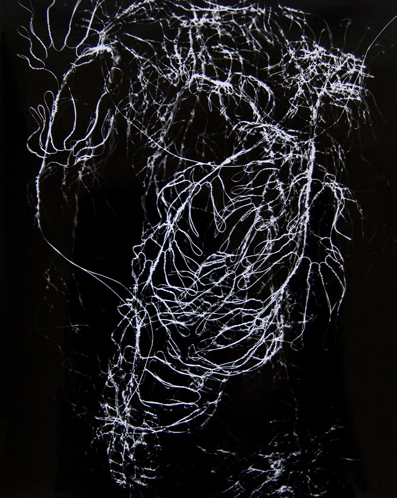 Julie Koehler.  Weightless.  Photogram. 10 in x 8 in