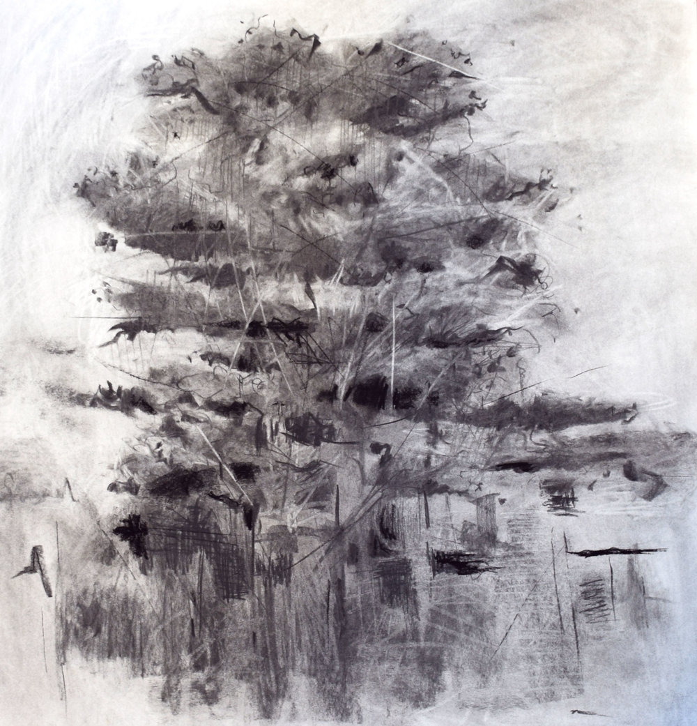 "#17 Monterey   Charcoal on Paper  31"" x 33 ½""  $1500   Click to Inquire"