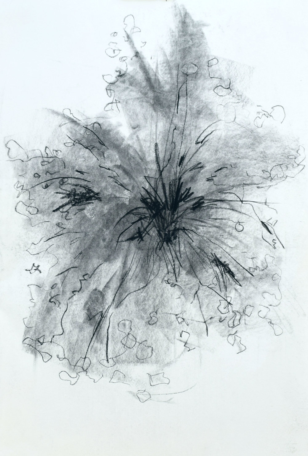"#14 Blooming   Charcoal on Paper  14 ½"" x 20 ½""  $600   Click to Inquire"