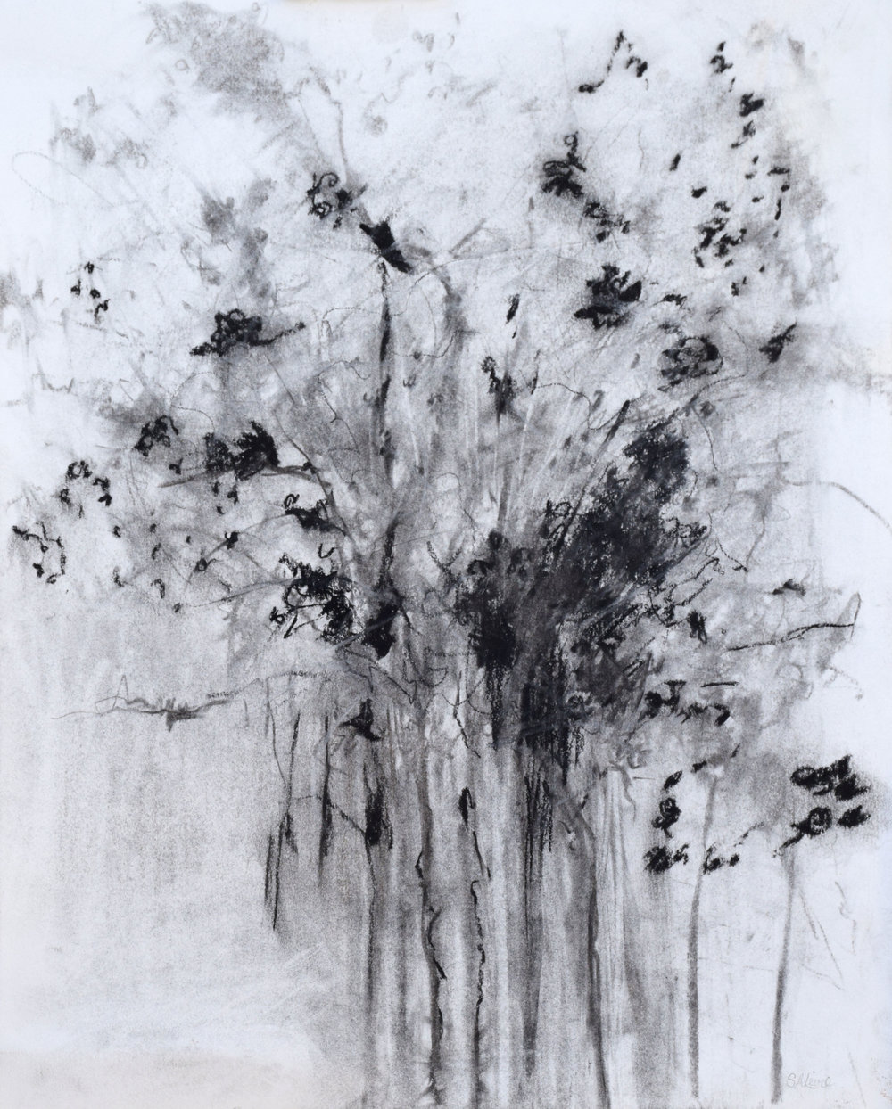 "#2 Flowering Tree   Charcoal on Paper  16 ½"" x 19 ½""  $600   Click to Inquire"