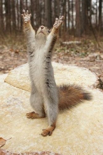 whyyyyy squirrel
