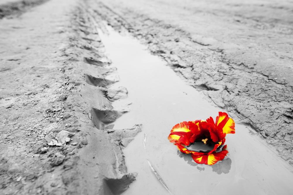 Flower Mud Track.jpg