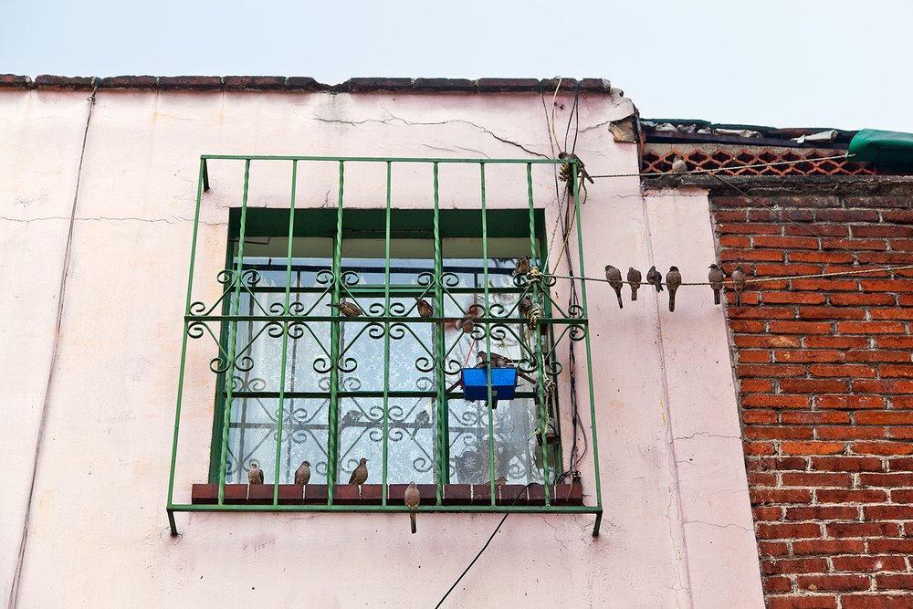 birds on a wire mexico city houses.jpg