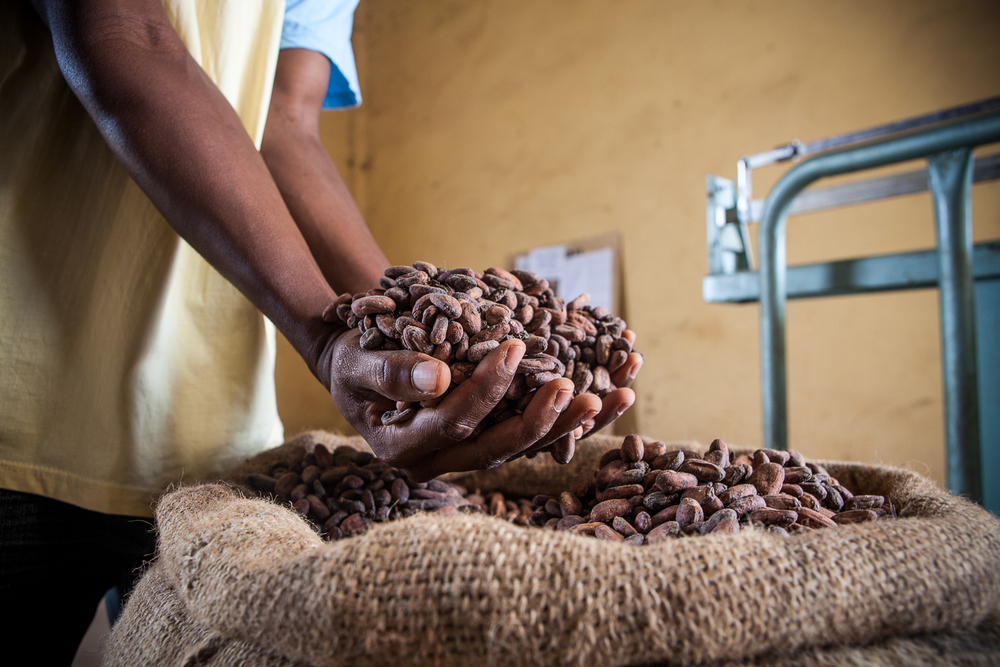 Cocoa production, Ivory coast