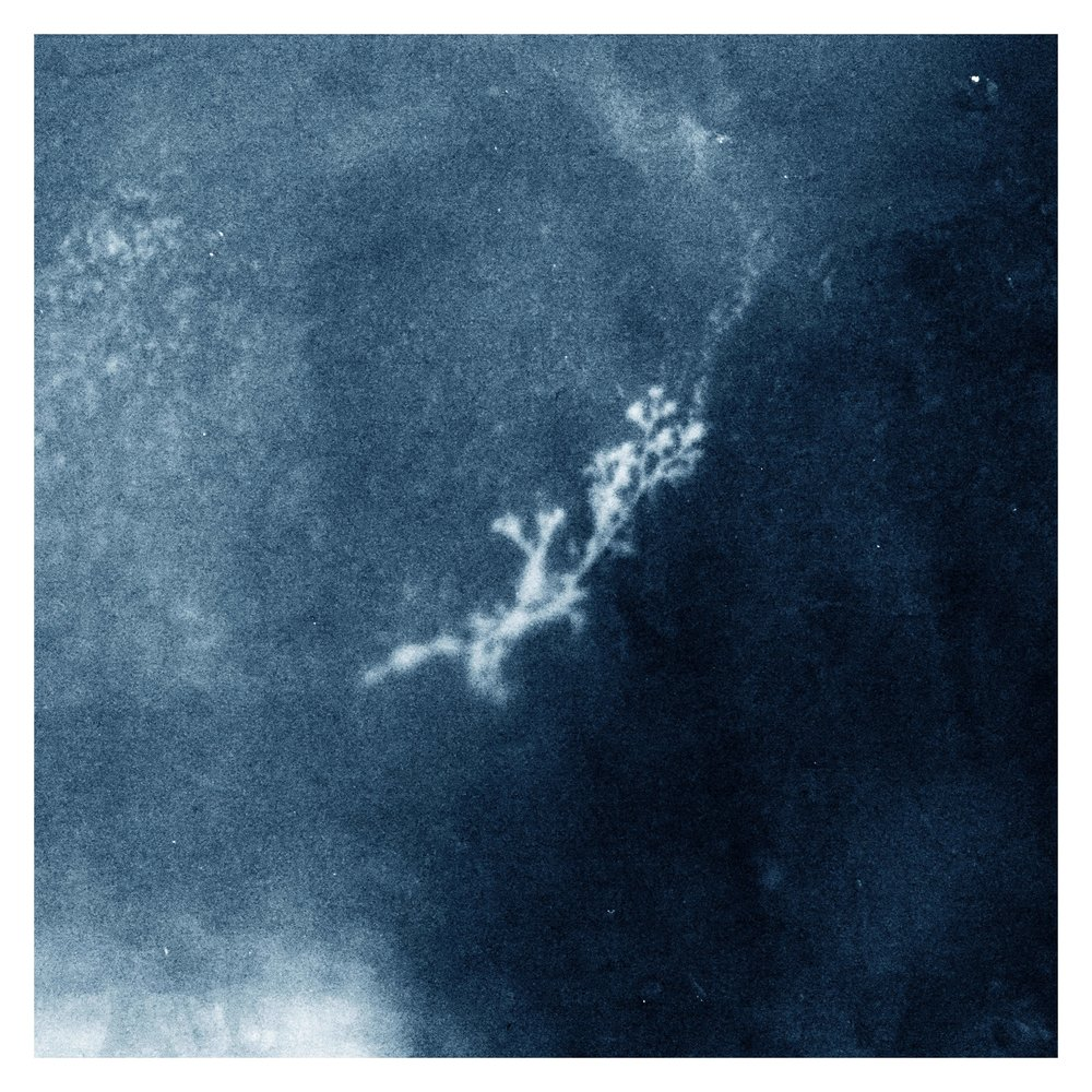 Digital cyanotype no.1 B smallest.jpg