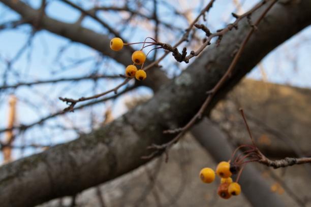 berries5_1606-612x408.jpg