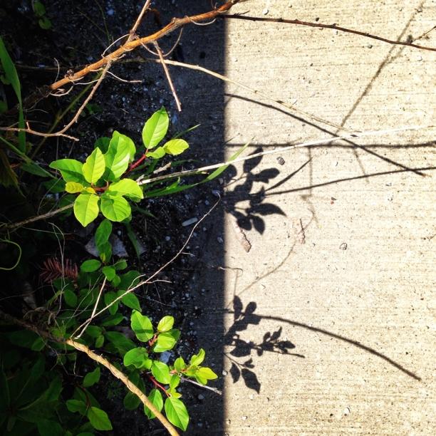 shadow+light | c Heather Hancock 2014