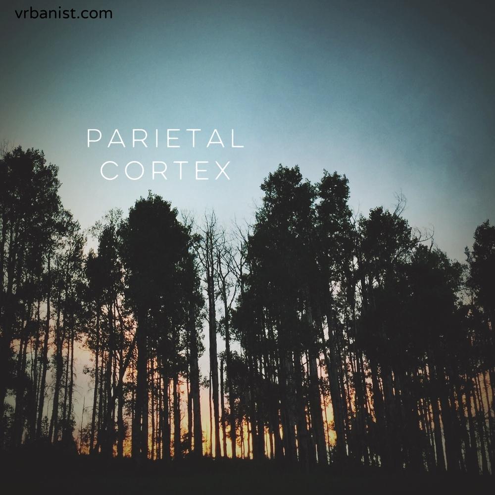 Parietal Cortex