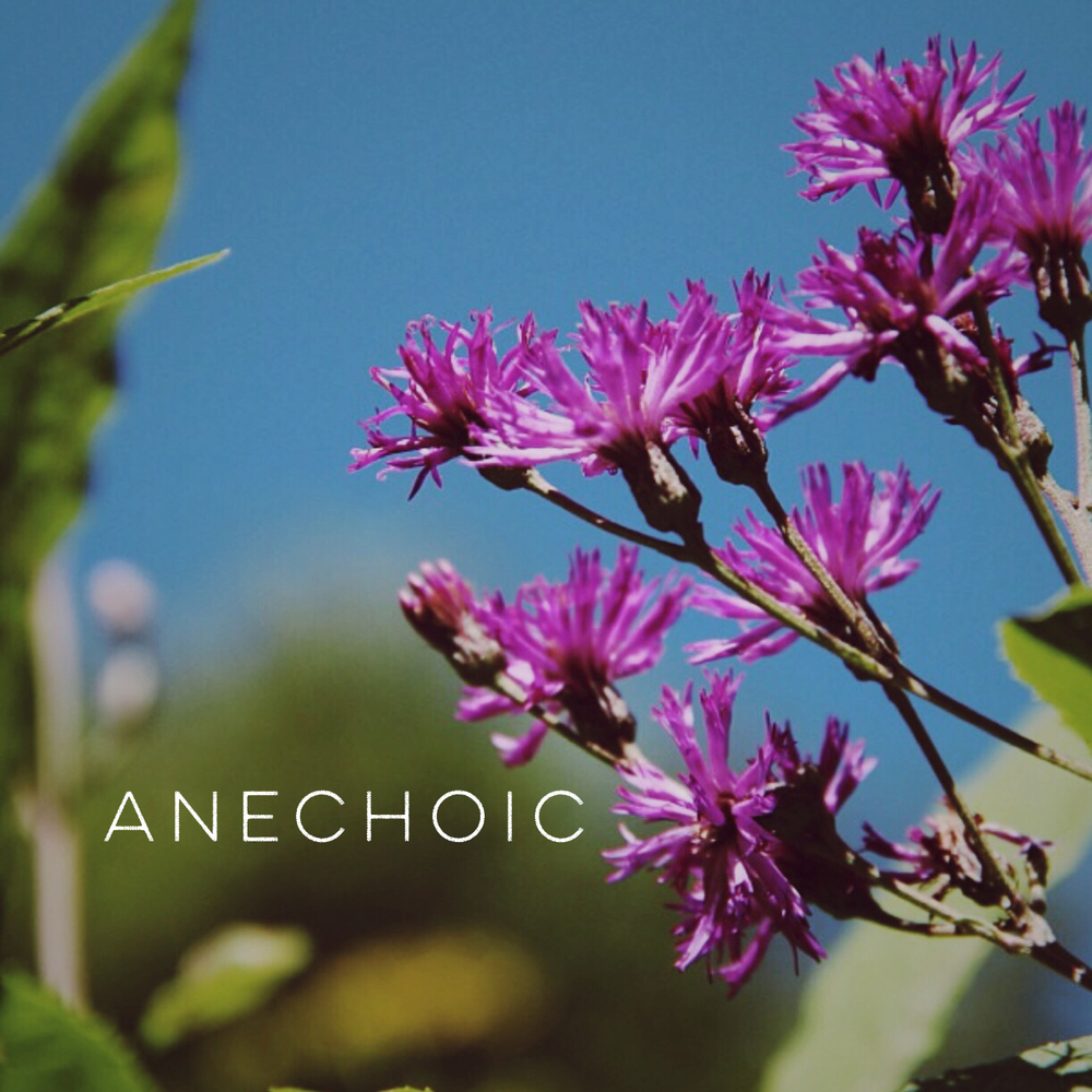 Anechoic