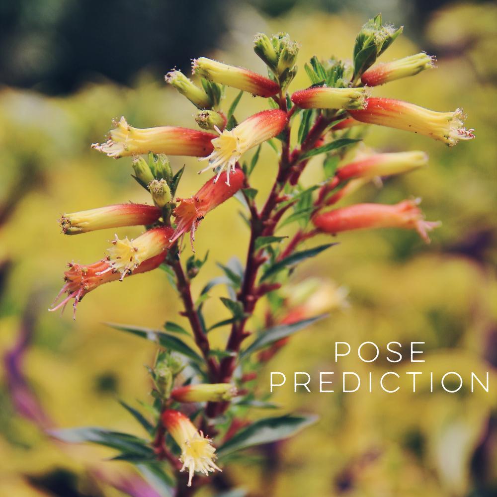 Pose Prediction