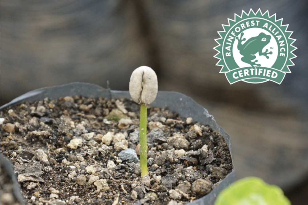 Green coffee - A Certified Rainforest Alliance partner making coffee more than just organic.