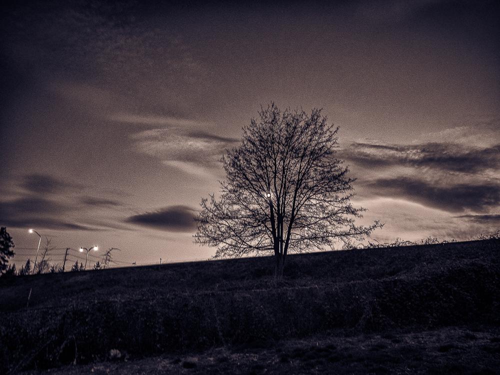 © Rhys Riddell/TangleTown