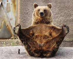 Pilates 101 bear