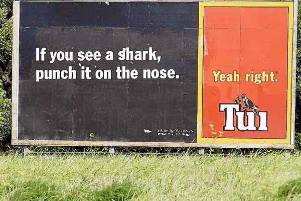 Tui Shark advice.jpg