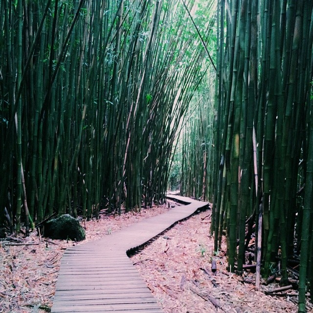 You listen to the creaking of bamboo and it's music to your ears as you saunter through a bamboo forest along the Pipiwai Trail.