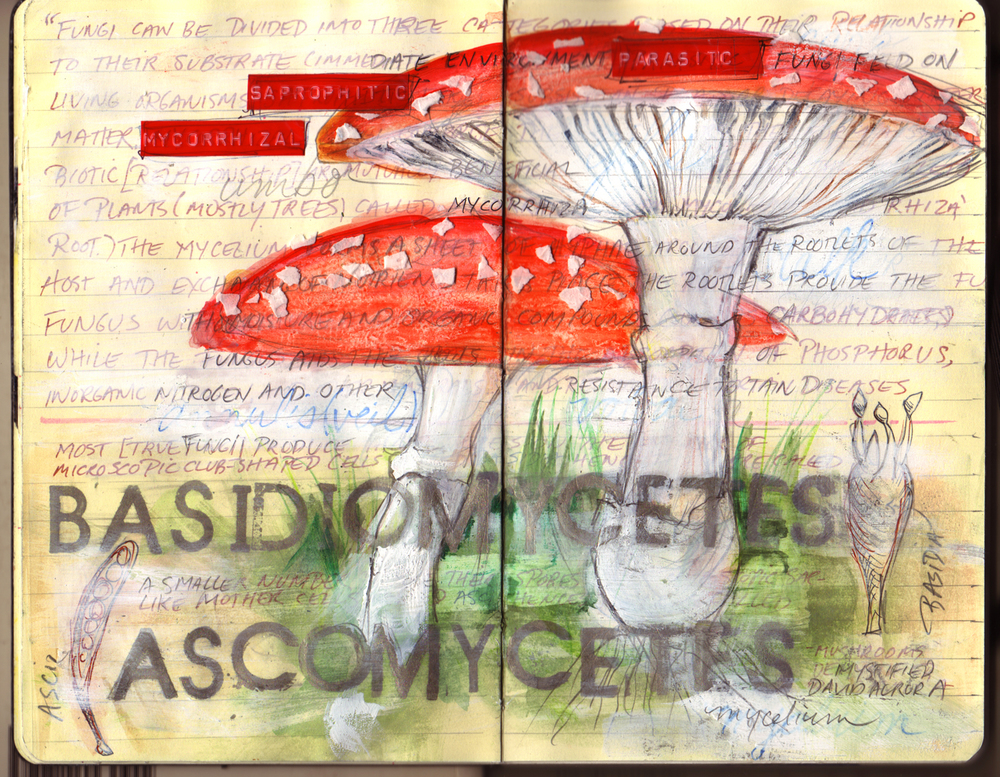 DCF Moleskine Mushrooms rev2.jpg