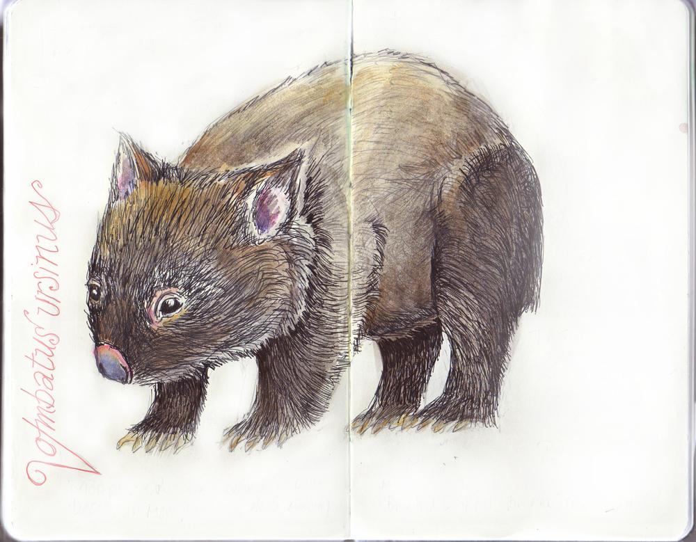 DFiedler_Wombat Journal.jpg