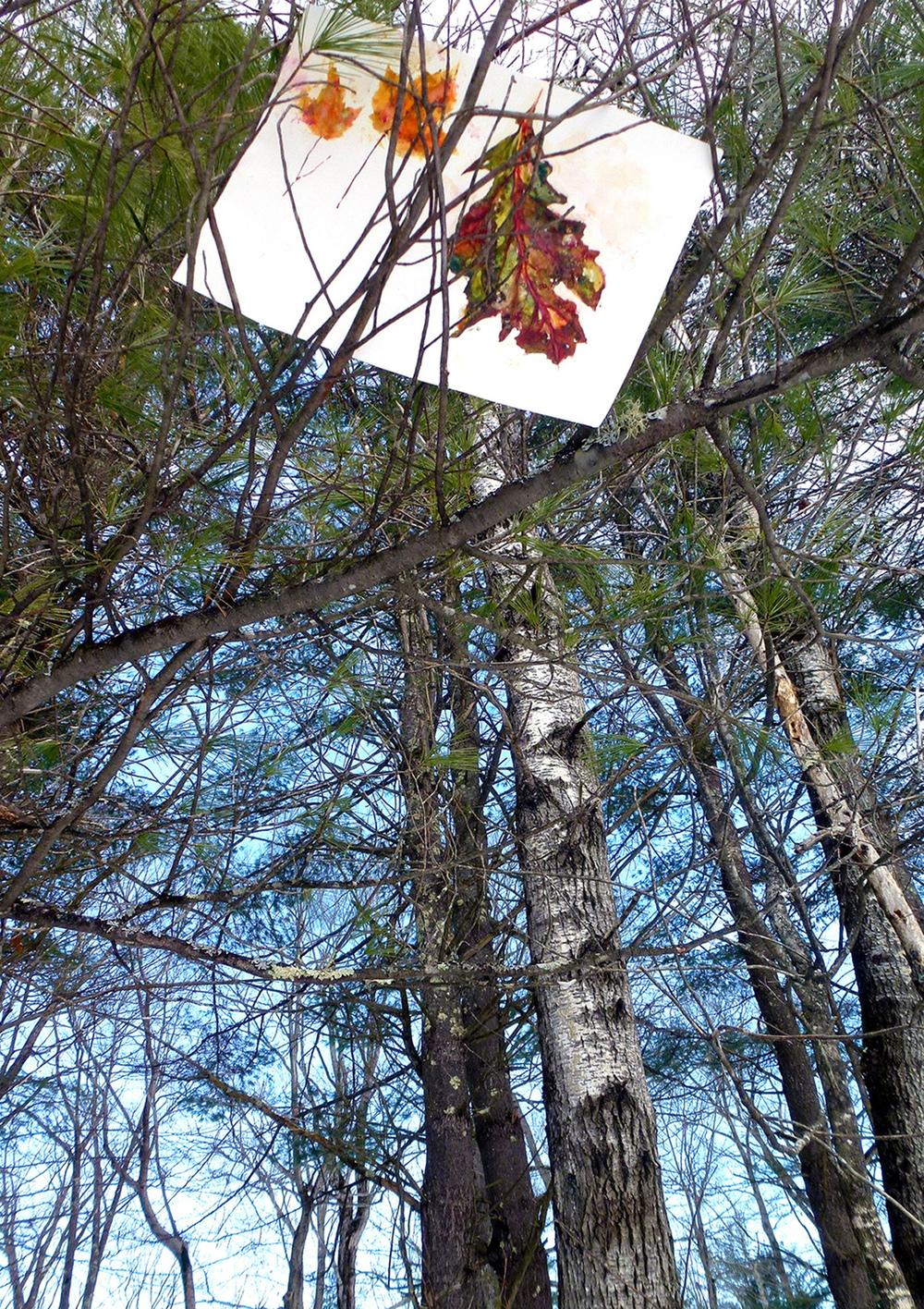 Diane_Fiedler_LeafPaintTrees_sm.jpg