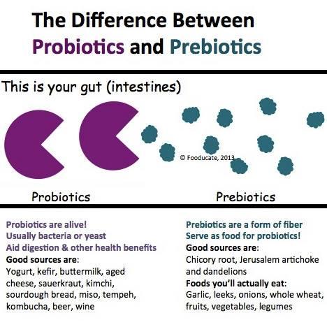 prebiotics-probiotics-sunshine-colonics.jpg