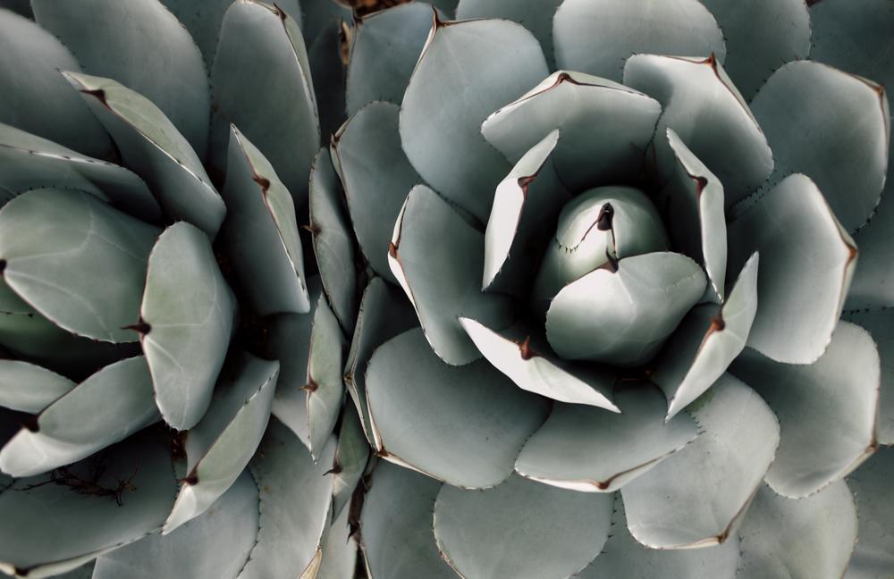 arizona-sedona-cactus-garden-zoaphoto3284.JPG