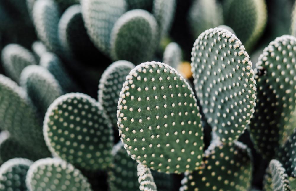 arizona-sedona-cactus-garden-zoaphoto3286.JPG