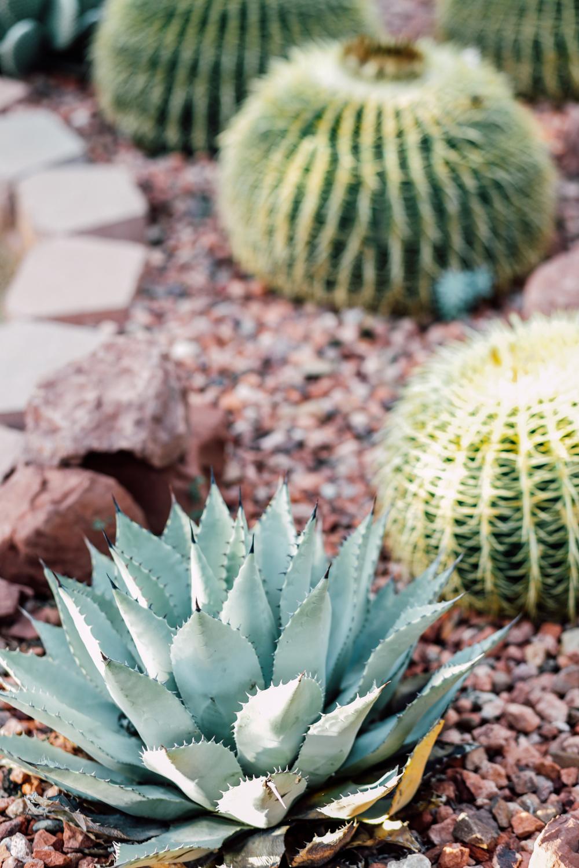 arizona-sedona-cactus-garden-zoaphoto3290.JPG