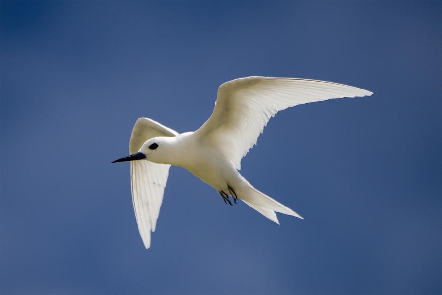 island-bird