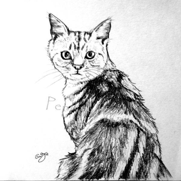 Kingdom For A Cat W.jpg