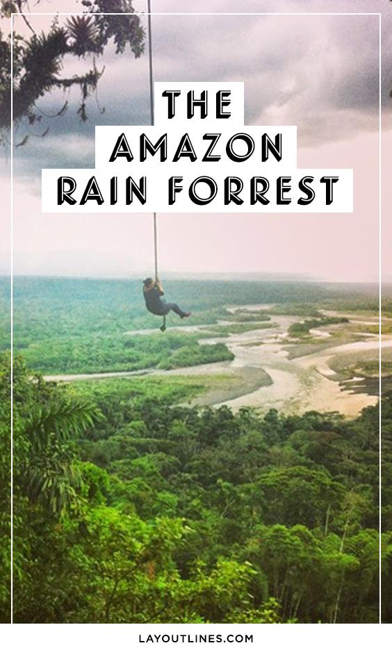 THE AMAZON RAIN FORREST