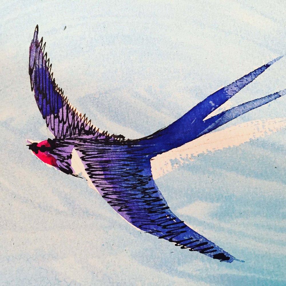 swallow drawing.JPG