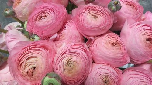 bruidsboeket met roze ranonkels