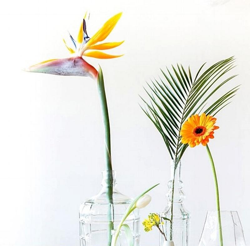 Strelitzia - of wel een 'paradijsvogelbloem'