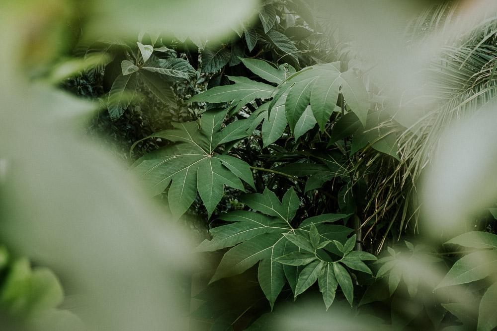 Sheffield Botanical Gardens-4.jpg