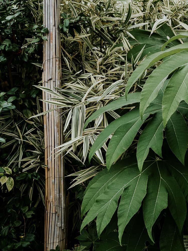 Sheffield Botanical Gardens-5.jpg