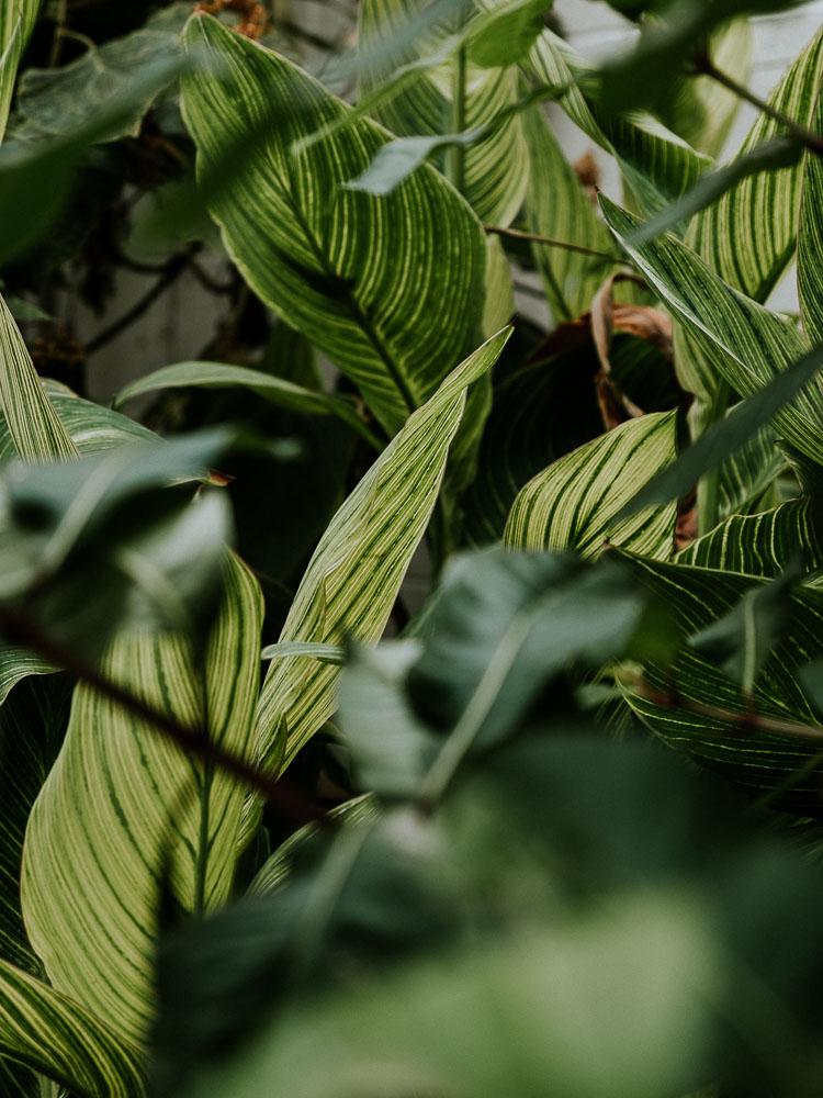 Sheffield Botanical Gardens-11.jpg