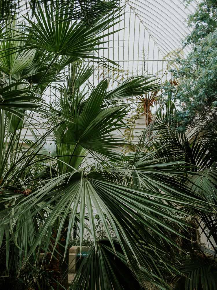 Sheffield Botanical Gardens-17.jpg