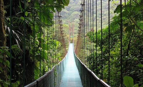 monteverde-cloud-forest-reserve-suspense-bridge21.jpg