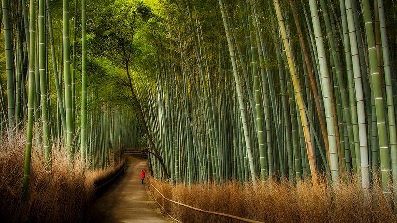 sagano-bamboo-forest-3-resize2[2].jpg