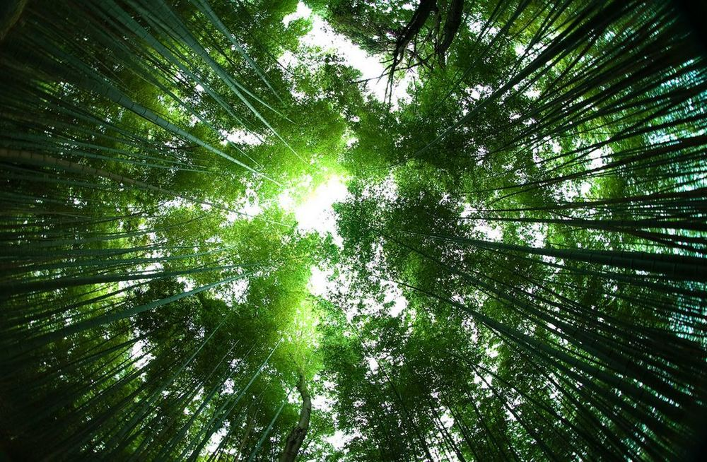 Sagano-Bamboo-Forest-Japan-soundwave.jpg