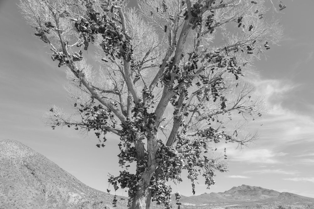 A shoe tree off of Highway 50 near Austin, Nevada. Great Basin.