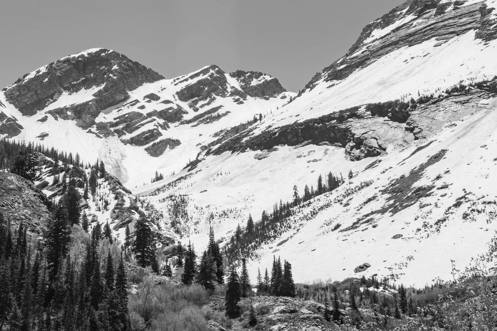 The north face of Twin Peaks from Broads Fork meadow. Snowpack can linger all summer. Twin Peak Wilderness, Wasatch Range, Utah.