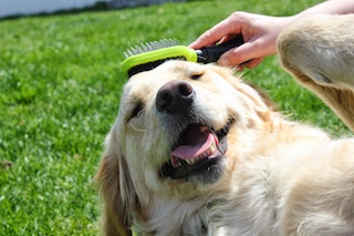 What S The Best Brush For Your Dog Tails On Trails