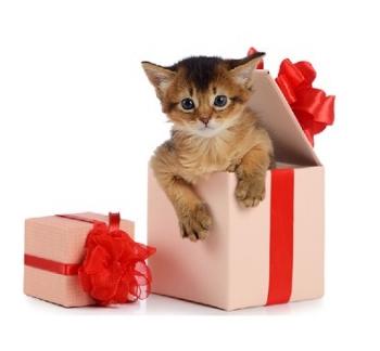 Gift_box_kitten_sm.jpg