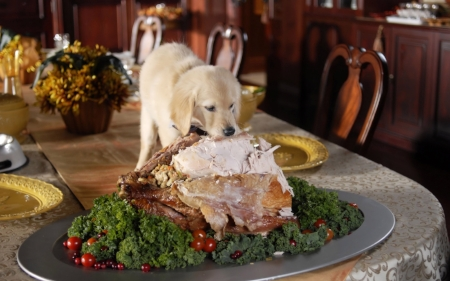 naughty_thanksgiving_puppy_wallpaper_2560x1600_wallpaperhere.jpeg
