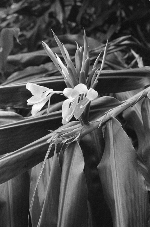 68_bloomweb.jpg